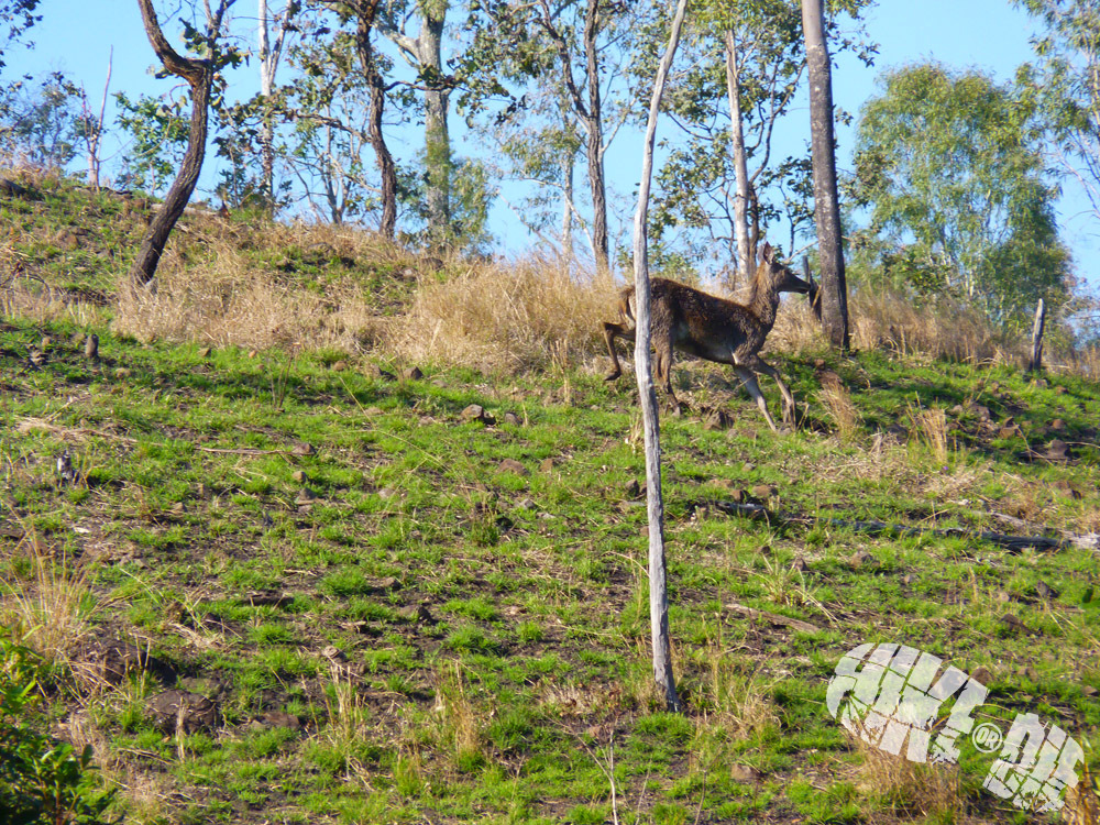 deer, hiking, hike, camping