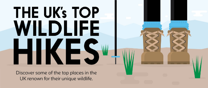 The UK's Top Wildlife Hikes