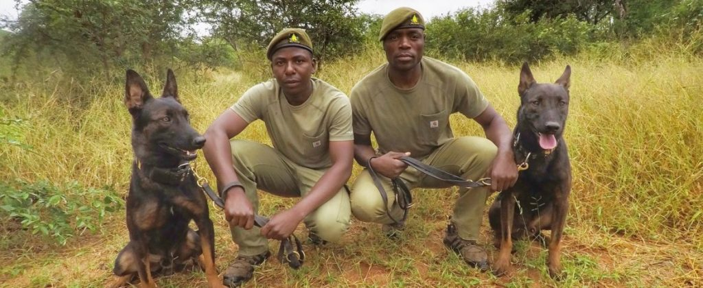 Soldiers For Wildlife working with Dogs For Wildlife