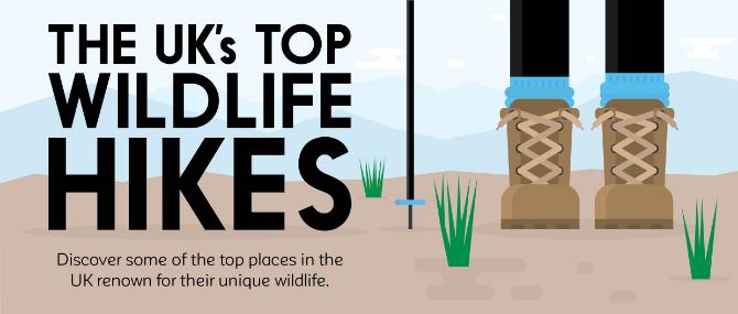 The UK's Top Wildlife Hikes